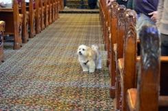 Calvary UMC Dog Service (1)
