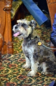 Calvary UMC Dog Service (4)