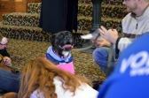 Calvary UMC Dog Service (5)